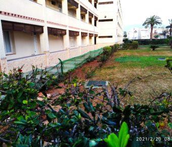 Replantación de setos / Neu gepflanzte Hecken / Replanted hedges