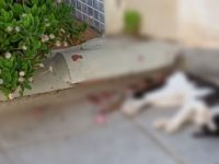 Gatos envenenados / Vergiftete Katzen / Poisoned Cats